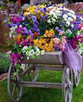 Planta Spathiphyllum, Planta para Regalar, Servicio de Envío Urgente, Flores a Domicilio, Floristería Online, Comprar Flores Online