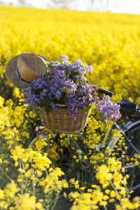 enviar cesta de flores primaverales a domicilio, floristería online, enviar cesta de flores para un nacimiento, cesta de flores para hospital, cesta de flores para una empresa, cesta de flores para una jubilación, cesta de flores para cumpleaños