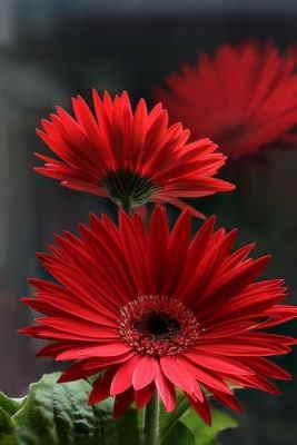 Centro Flores Rabat, Centro de Flores para Regalar, Floristería Online, Envíos Urgentes, Centro de Flores de Regalo, Floristería Bausa Flor