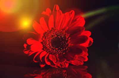 Ramo Flores Londres, Ramos de Flores, Flores Rojas, Ramo de Flores para Regalar Envío de Flores Urgentes Floristerías en Barcelona