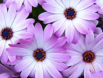 Ramo Flores Grecia, Floristería Online, Ramos de Regalo, Floristas Profesionales, Enviar Flores Urgentes,Comprar Flores en Barcelona