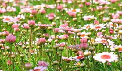 Ramo Flores Suiza, Flores para Barcelona, Floristería Online, Arreglos Florales, Ramos de Flores Elegantes, Floristería Bausa Flor