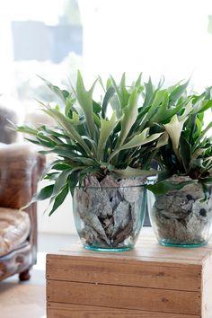 Planta Anthurium, Planta de Interior, Regalar una Planta, Floristería Online, Flores a Domicilio, Floristería Bausa Flor
