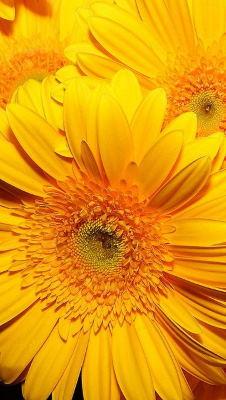 Enviar flores urgentes a domicilio, enviar flores tonos alegres, flores de aniversario, flores, cestas de flores, flores nacimiento